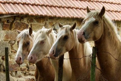 Pferde, die artgerecht gehalten werden, sind ausgeglichener.