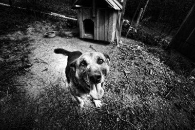 Die reine Zwingerhaltung von Hunden ist eine Sache für den Tierschutzverein.