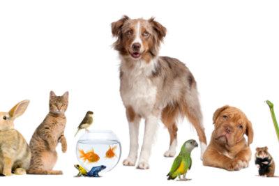 Überlegen Sie gut, welches Haustier am besten zu Ihnen passt!