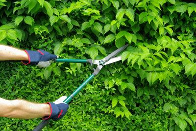 Um Sonntags die Hecke zu schneiden ist eine mechanische Heckenschere am besten.