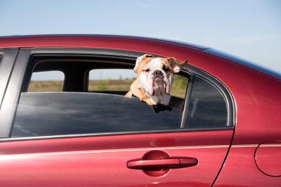 Hausmittel gegen Hundegeruch im Auto lassen sich sehr leicht herstellen.