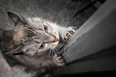 Katzen kratzen vor allem zur Körperpflege.