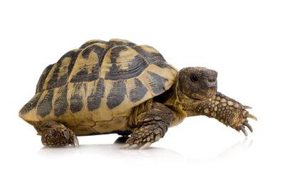 So bauen Sie ein Schildkrötengehege für draußen selbst.