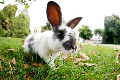 Bauanleitung für ein Kaninchengehege.