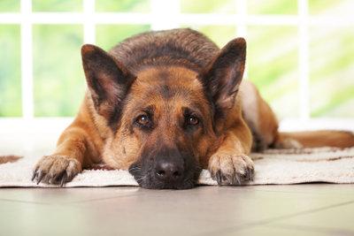 """Nicht jeder Hund wartet friedlich auf die Rückkehr seines """"Herrchens"""", sondern macht manchmal auch alles kaputt."""