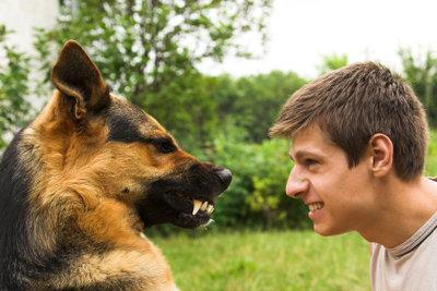 Überwinden Sie Ihre Angst vor Hunden, indem Sie sich der Angst stellen!
