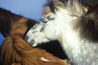 Virtuelle Pferdehaltung- auf Horwse können Sie sogar unsterbliche göttliche Pferde bekommen.
