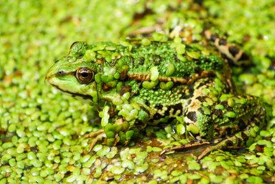 Die Natur ist in Sachen Camouflage selber machen das beste Vorbild.