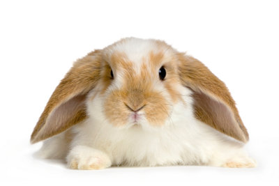 Für Abkühlung im Sommer ist ein Kaninchen sehr dankbar.