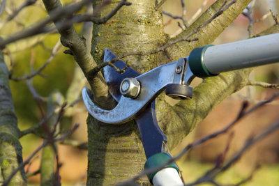 Wenn Sie ihre Bäume vom Profi beschneiden lassen, können die Kosten unerwartete Ausmaße annehmen