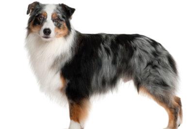 Ein Familienhund sollte auch einer Familienhunderasse angehören.