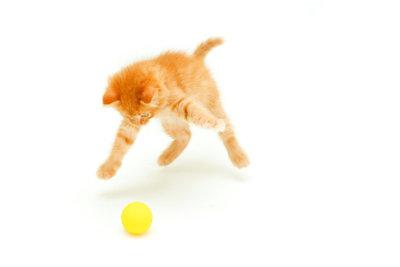 Katze Rennt Wie Verrückt Durch Die Wohnung