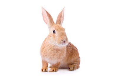 Zwergkaninchen benötigen einen gut ausgestatteten Kaninchenstall.