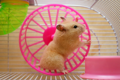 So säubern Sie den Hamsterkäfig stressfrei.