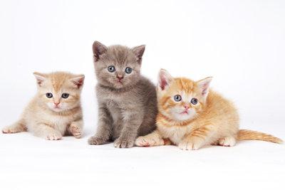 Babykatzen aufziehen, bedeutet viel Liebe und Fürsorge.