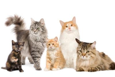Sie wollen eine alte und eine junge Katze zusammen halten? So gewöhnen sich die Tiere aneinander!