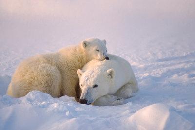 """Eisbären sind eine Inspiration für ein selbstgemachtes """"Glücksbärchis""""-Kostüm."""