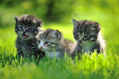 Wenn Katzen geschlechtsreif werden, kann dies sehr anstrengend sein.