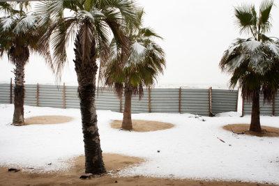 Eine Palme macht noch keinen Sommer.