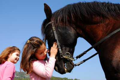 Ein Pferd - ein guter Freund des Menschen.