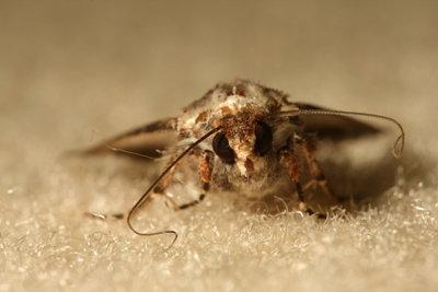 Eine Mottenplage kann die liebsten Kleidungsstücke ruinieren, deshalb sollten Sie auch vorbeugen.