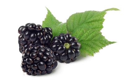 Zum Verarbeiten der Beeren zu süßem Wein eignen sich nur die reifen, schwarzen Früchte.