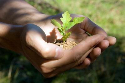 Viele wollen, bevor sie sterben, einen Baum pflanzen.