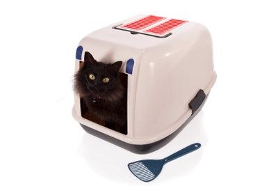 Um den unangenehmen Geruch des Katzenklos zu vermeiden, bietet sich eine geschlossene Toilette an.