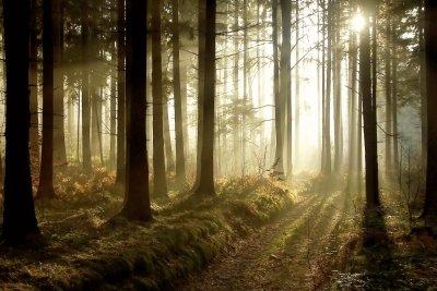 Das Überleben im Wald ist gesichert.