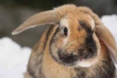 Damit sich Ihr Kaninchen auch im Winter wohl fühlt, müssen Sie den Stall winterfest machen.