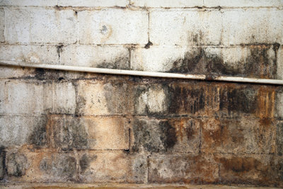 Feuchte Keller sind besonders anfällig für Schimmelpilze.