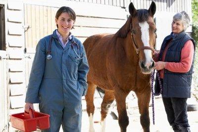 Tierarzt werden können Sie ausschließlich durch ein Studium der Tiermedizin.