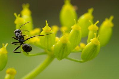 Die fleißigen Ameisen sind manchmal lästig.