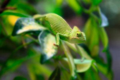 Viele im Terrarium gehaltene Tiere benötigen eine erhöhte Luftfeuchtigkeit.