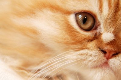 Eine Katze stubenrein zu bekommen ist eigentlich kein großes Problem.