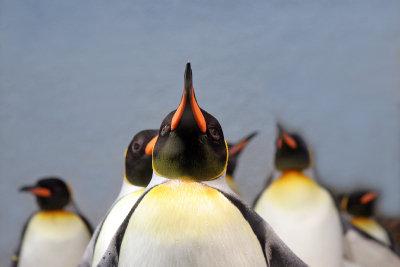 So machen Sie sich ein Pinguin-Kostüm selber.