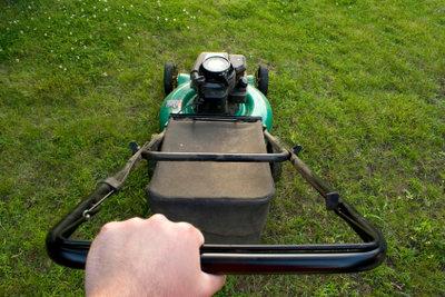 Der erste Rasenschnitt muss richtig durchgeführt werden, damit Ihr Rasen erfolgreich wächst.