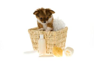 Einen Badezusatz sollten Sie bei Hunden nur in Ausnahmefällen verwenden.
