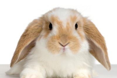 Auch Kaninchen brauchen Spielzeug für ein glückliches Leben.