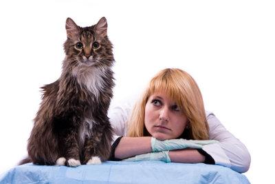 So können Sie Ihrer Katze bei Nierenproblemen helfen.