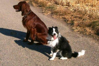 Auch Ihr Hund lernt, andere Hunde zu ignorieren.
