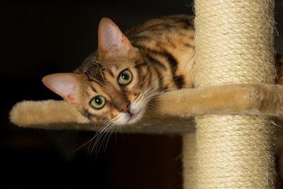 Einen wetterfesten Kratzbaum können Sie für Ihre Katze selber bauen.