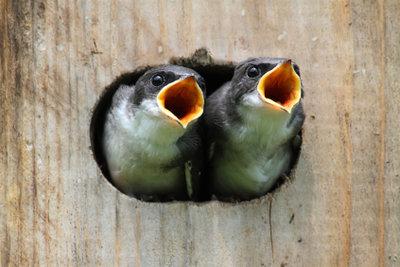 Die Aufstellung von einem Vogelhaus auf dem Balkon ist ganz leicht.