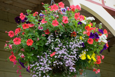 Balkonpflanzen reagieren gerade im Frühling empfindlich auf Frost und benötigen besonderen Schutz.