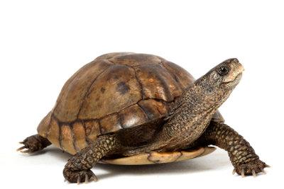 So gut soll es Ihrer Schildkröte auch gehen.