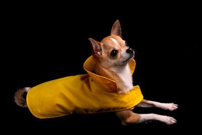 Hundemäntel lassen sich leicht selbst stricken.