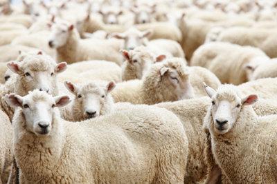 Schon zu viele Schafe gezählt? Was kann man tun, wenn man nicht schlafen kann?