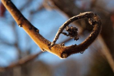 Einen Essigbaum zu entfernen, ist mühevoll.