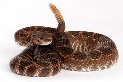Giftschlangen als Haustier zu halten ist nicht einfach.