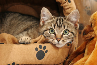 Viel Wärme und Ruhe hilft der Katze während einer Blasenentzündung.